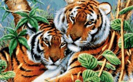 большие кошки, тигры
