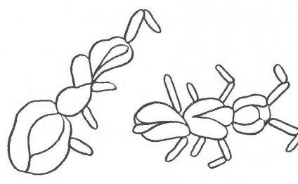 Схема №168 для вышивания